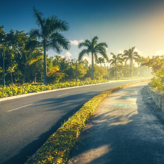 """Tropical garden and pathway toward luxury resort in Punta Cana,"" stock image"