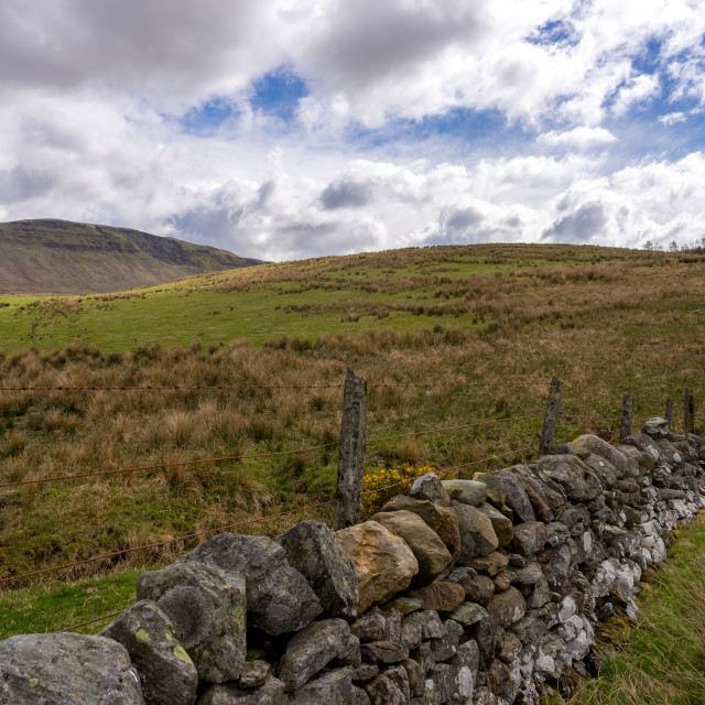 """""""Field with a stone wall in Scotland, along the West Highland Way"""" stock image"""