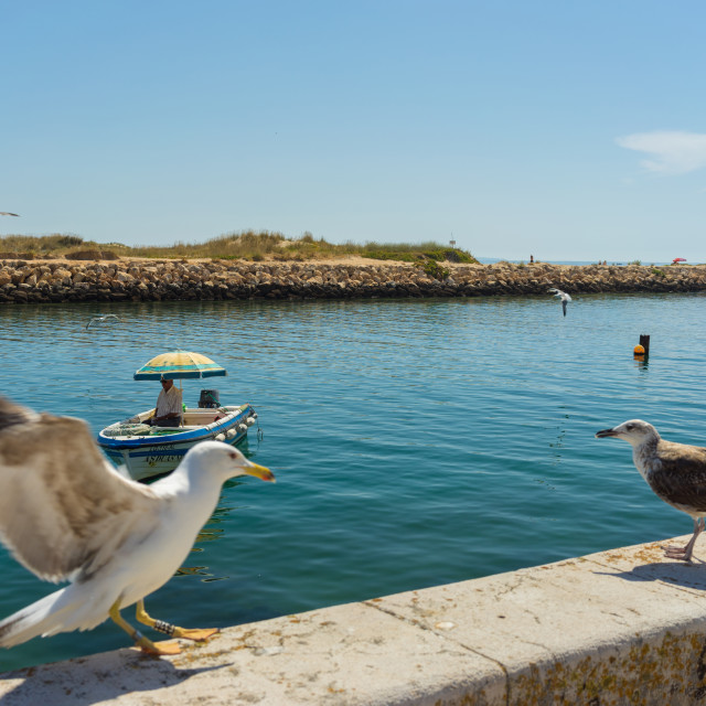 """""""Seagulls on a stone wall at a bay in Lagos, Portugal"""" stock image"""