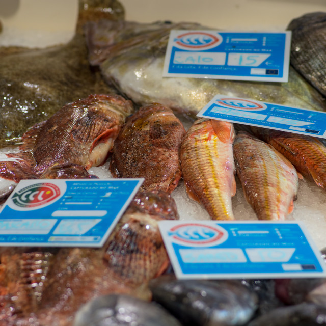 """""""Fish on ice offered in a portugese food market"""" stock image"""