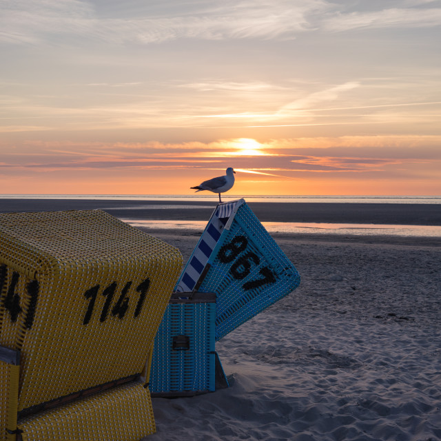 """""""Seagull standing on a beach chair looking into the sunset"""" stock image"""