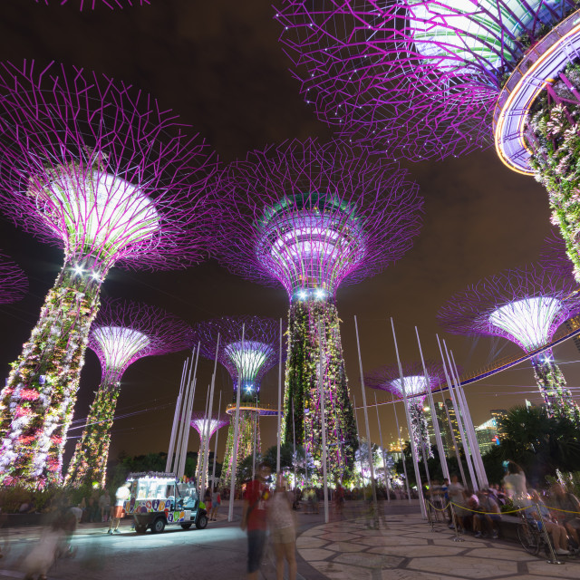 """""""Supertrees in Singapore"""" stock image"""