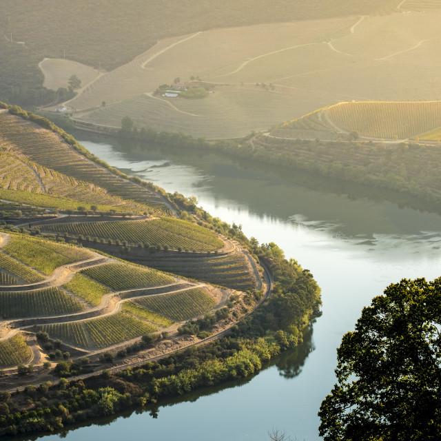 """vineyards in the Douro River, Alto Douro Wine Valley"" stock image"