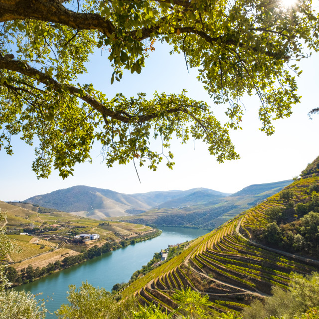 """vineyards in the Douro River, Alto Douro Wine Valley"" stock image"