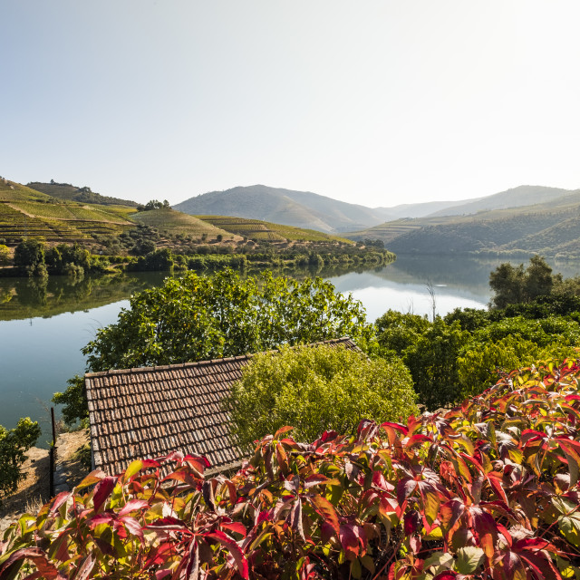 """""""Landscape in the vineyards in Douro River Portugal"""" stock image"""