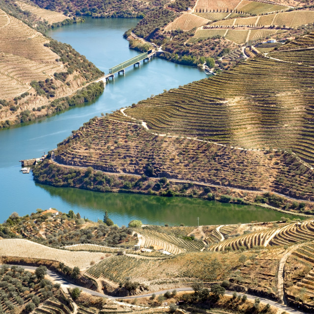 """Landscape in the vineyards in Douro River Portugal"" stock image"
