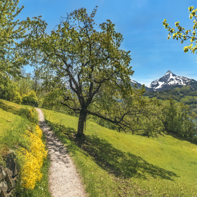 """Trail through an orchard in the Alps mountains"" stock image"
