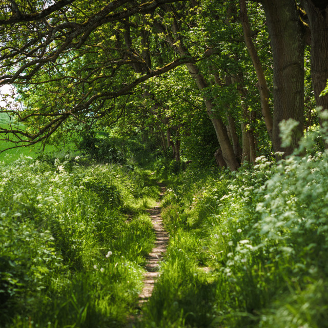 """""""Path between field and forest"""" stock image"""