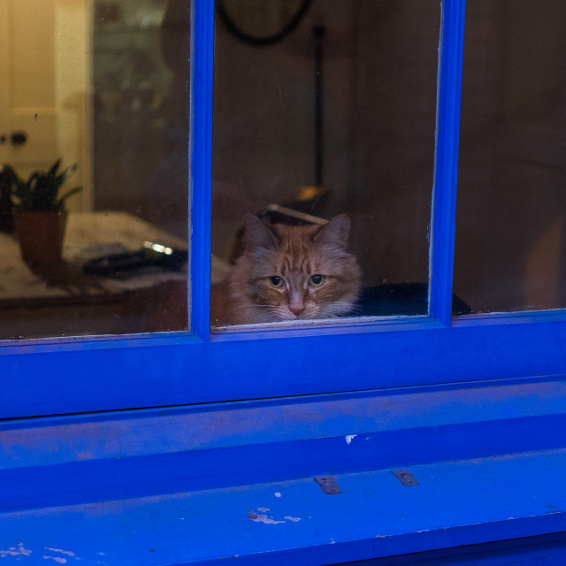 """""""Cat in the window"""" stock image"""
