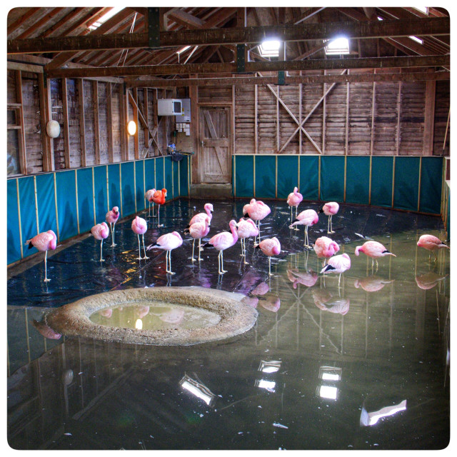"""Flamingo parlour"" stock image"