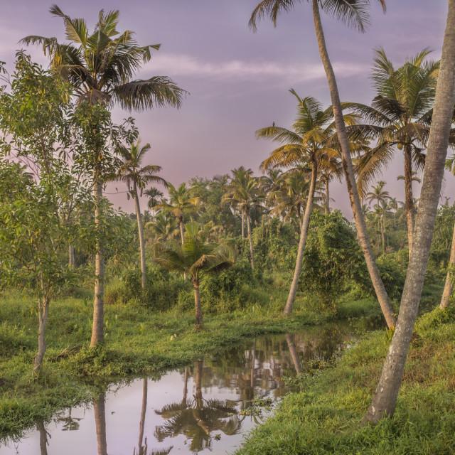 """""""Kerala Backwaters"""" stock image"""