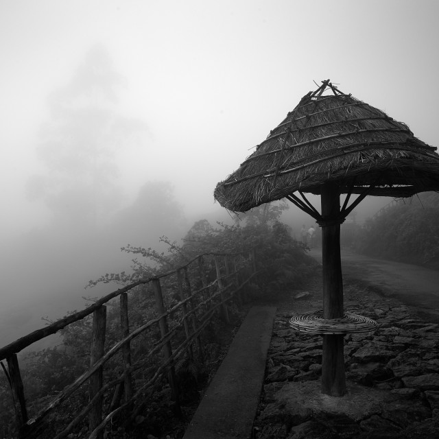 """Light, Mist and Trees - Study 5"" stock image"