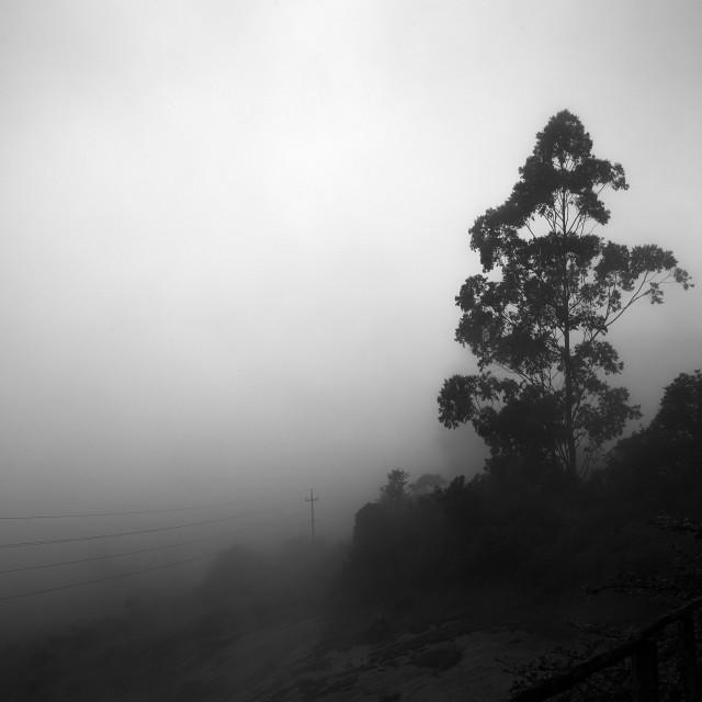 """Light, Mist and Trees - Study 4"" stock image"