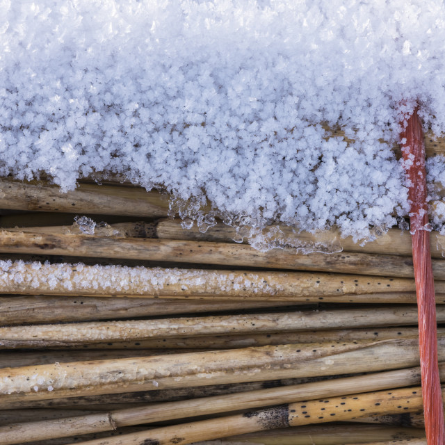 """""""Hoarfrost on Cane with Rope"""" stock image"""