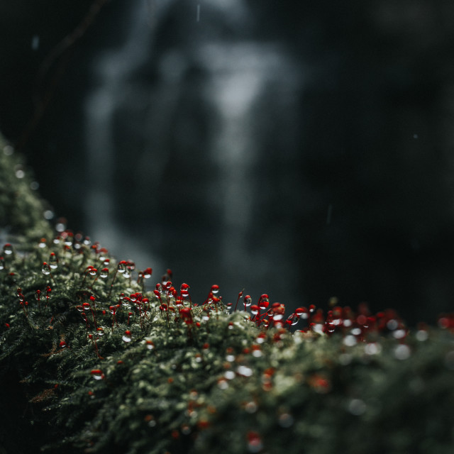 """Plants ar rain"" stock image"