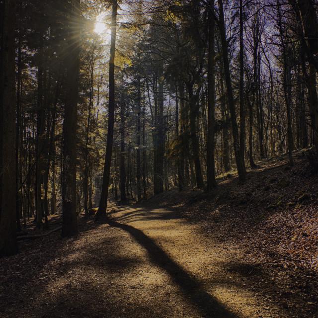 """Spring Woodland Path"" stock image"