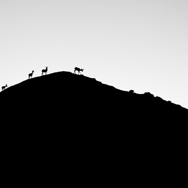 """Imaginary Deers"" stock image"