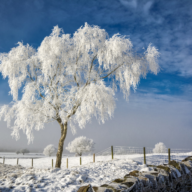 """""""Hoar Frost On The Beacon"""" stock image"""