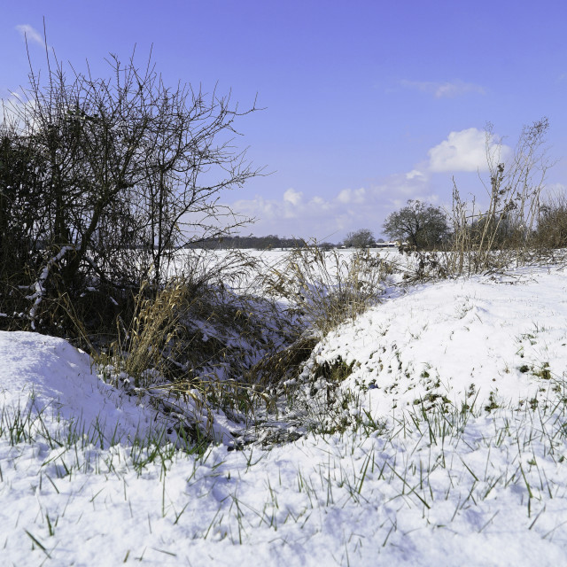 """""""A frozen stream leads to the snowy fields of Essex"""" stock image"""