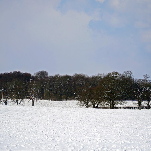 """""""Trees on a wintered field in Essex"""" stock image"""