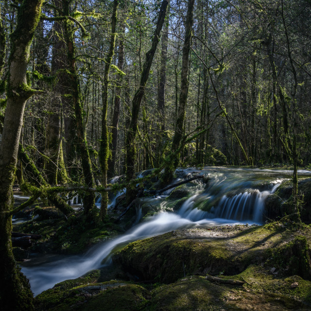 """""""Stream flowing through mossy forest"""" stock image"""