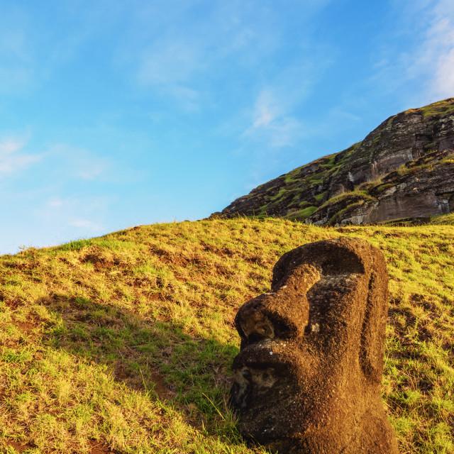 """Moai at the quarry on the slope of the Rano Raraku Volcano at sunrise, Rapa..."" stock image"