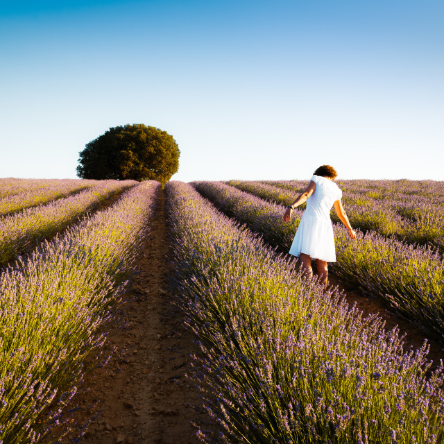"""Woman wearing white dress at lavender fields. Rear view. Summer"" stock image"