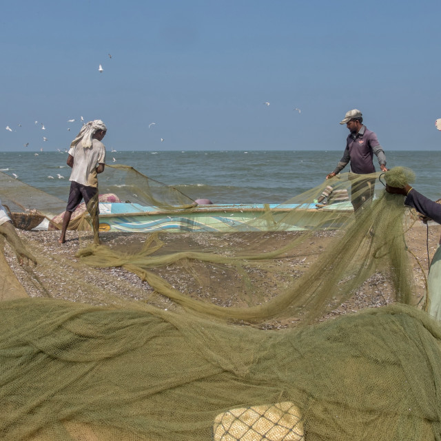 """Emptying the fishing net"" stock image"