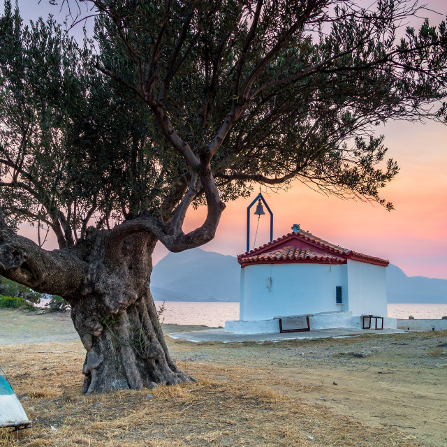 """Greek church and olive tree at the sunset"" stock image"