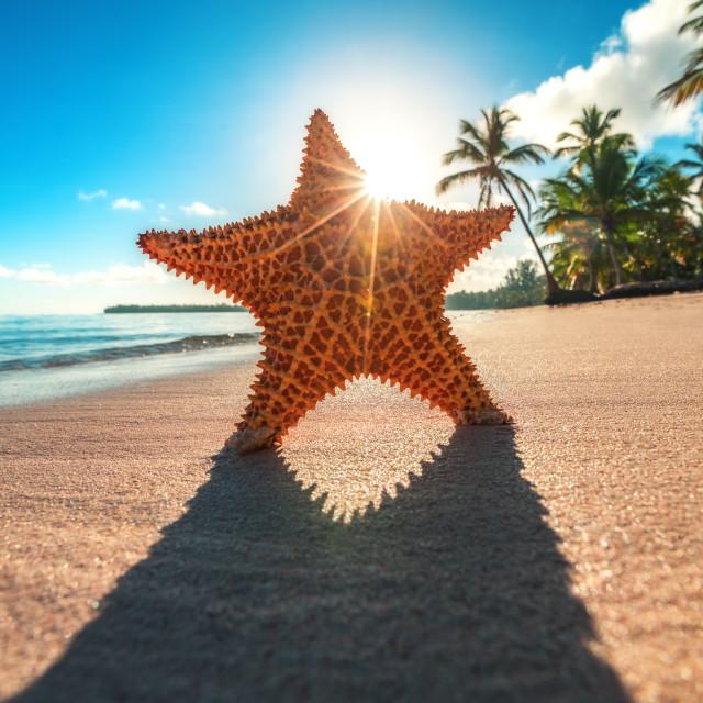 """Starfish on the beach at sunrise"" stock image"