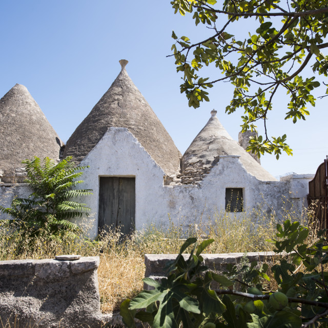 """TRULLO IN PUGLIS ITALY"" stock image"