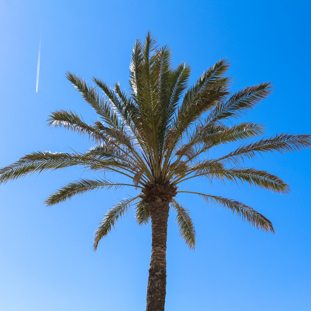 """Palm Tree"" stock image"
