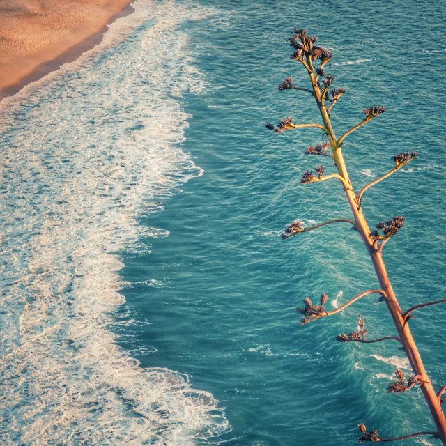 """""""Top view of the beach of Nazareth Portugal, this place is famous for the giant surf waves, called the Nazaré cannon with waves reaching 30 meters high."""" stock image"""