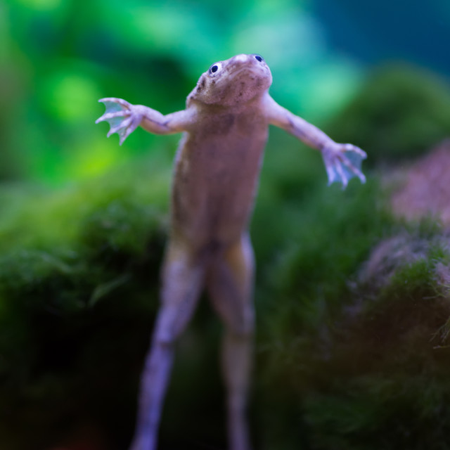 """Small Tropical Frog"" stock image"