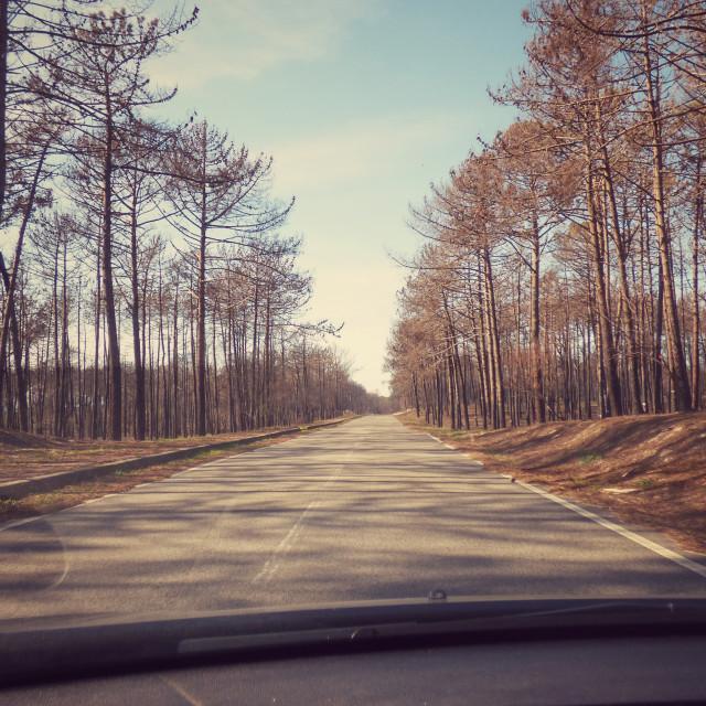 """Travel Road"" stock image"