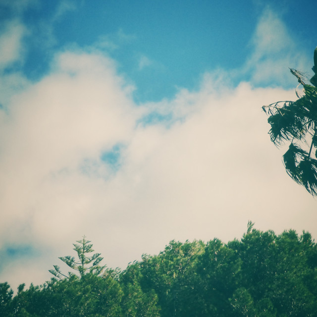 """""""Palm Tree alone against sky"""" stock image"""