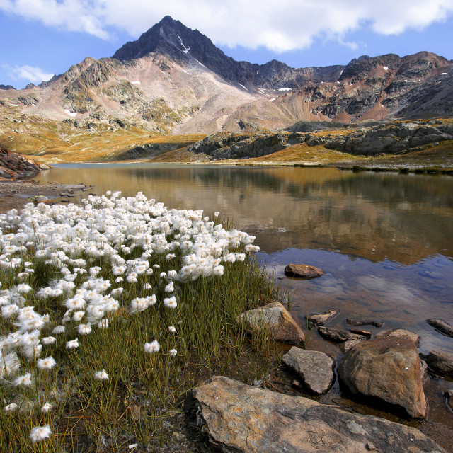 """White Lake to Gavia Pass-Stelvio Park"" stock image"