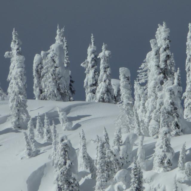 """Frozen trees"" stock image"