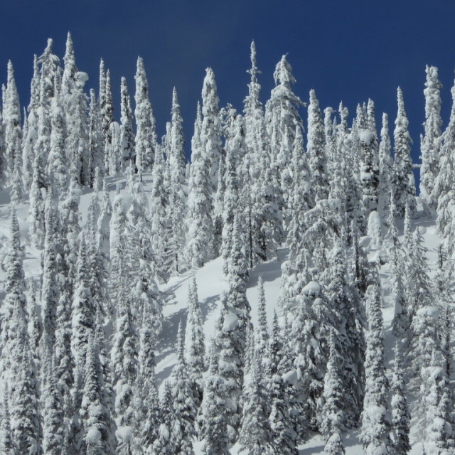 """""""Frozen forest"""" stock image"""