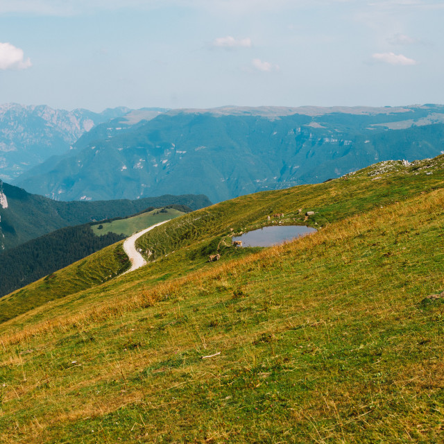 """Panoramic view from Monte Baldo with cows and pond"" stock image"