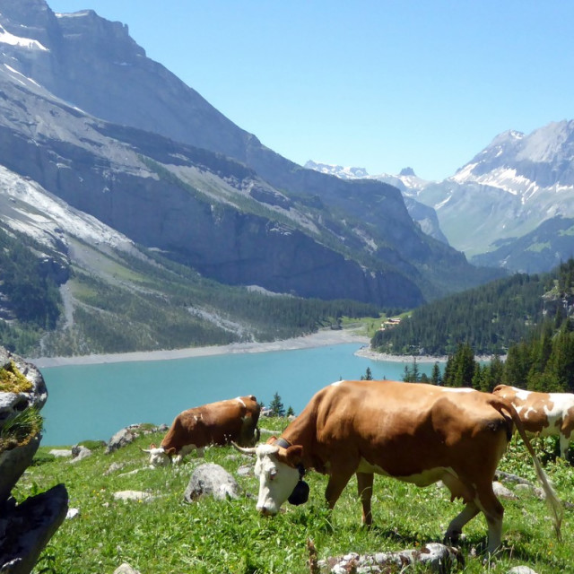 """Swiss mountain scene"" stock image"