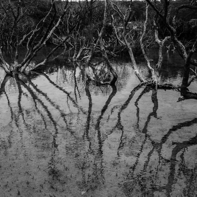 """""""Mangroves"""" stock image"""
