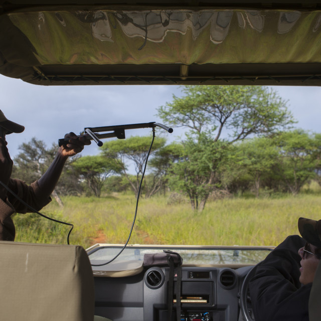 """Rangers Tracking The Big Cats, Okonjima, Namibia"" stock image"