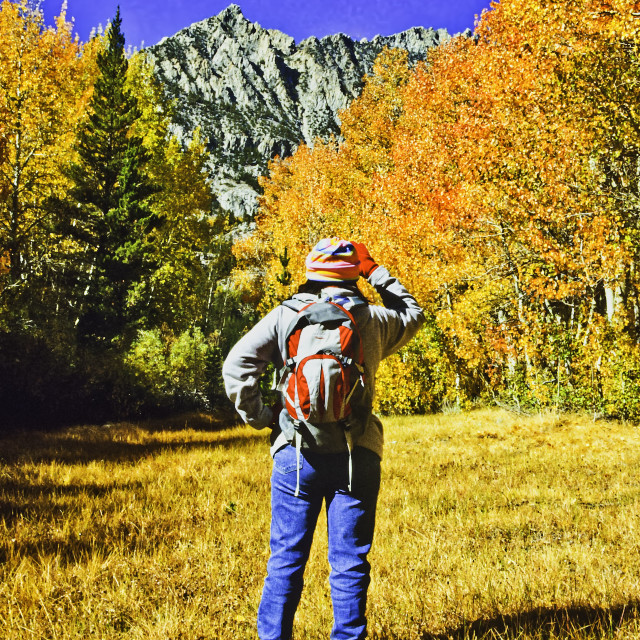 """""""Female Hiker Surrounded By Fall Color"""" stock image"""