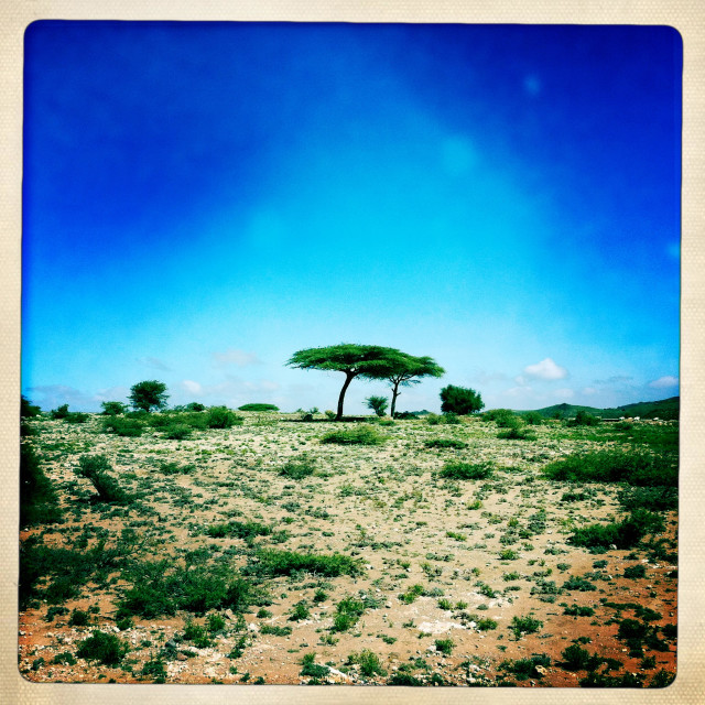 """""""Lonely Tree In An Arid Landscape, El Sheikh, Somaliland"""" stock image"""