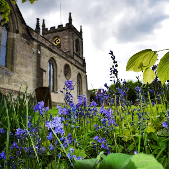 """""""Bluebells in a churchyard."""" stock image"""