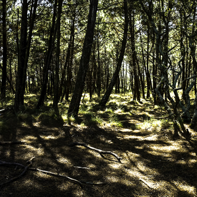 """Forest Panorama"" stock image"