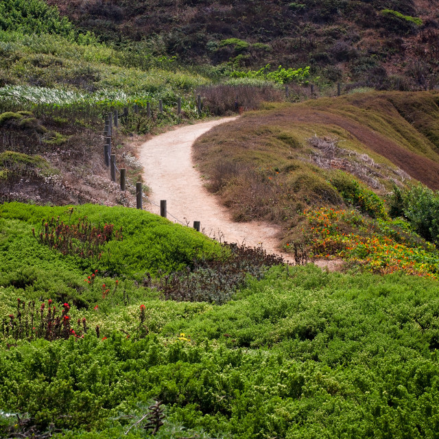 """Landscape Photo of Lush, Coastal Hiking Trail in San Francisco, California"" stock image"