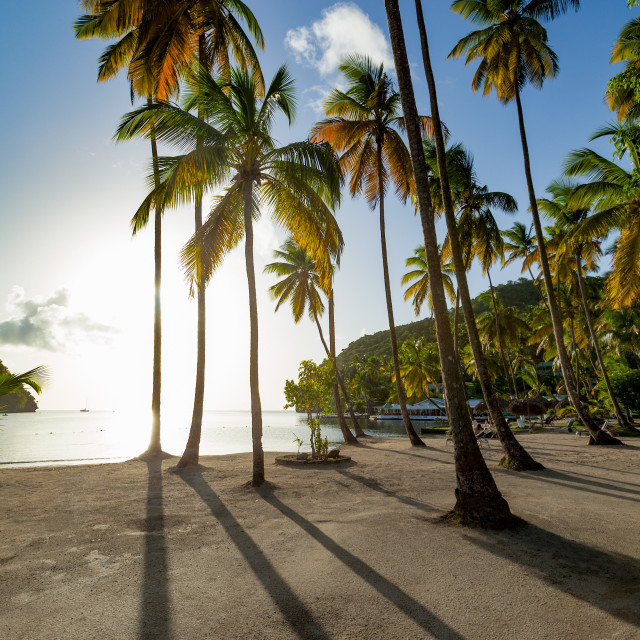"""Tall palms and long shadows on the small beach at Marigot Bay"" stock image"