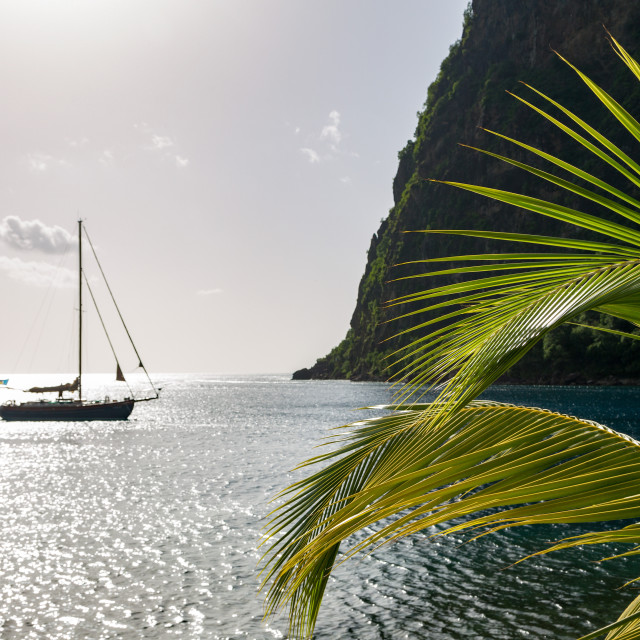 """Yacht moored close to the base of Petit Piton near Sugar Beach with palm..."" stock image"